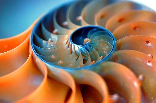 sezione aurea, spirale aurea, geometria sacra in azione, spirale di fibonacci